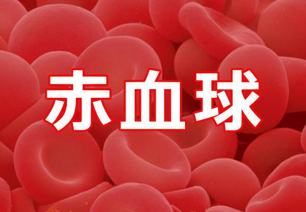 赤血球数に異常あり?!基準値を外れた時に疑う病気は?!