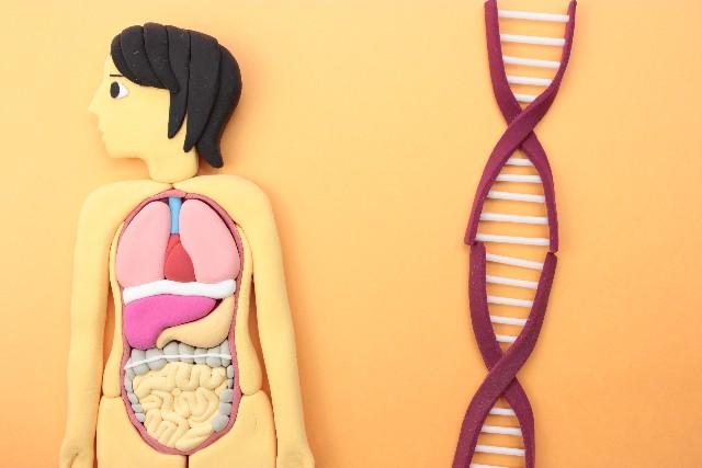 遺伝子検査とは?肥満や薄毛対策ができるの?検査結果の活用法